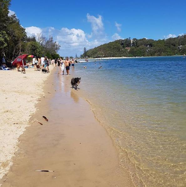 Palm Beach, Currumbin Dog Friendly Beach, Gold Coast, Qld   PetCloud