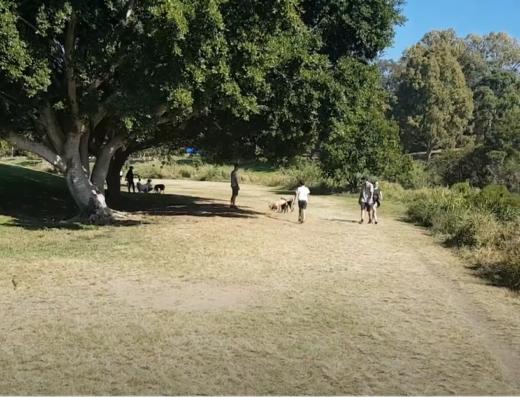 kedron brook offleash park