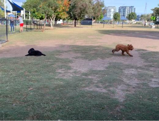 Bulimba Dog Park | PetCloud