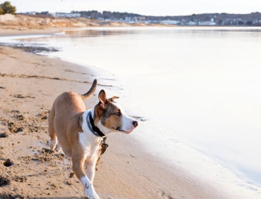 Nudgee Dog Beach