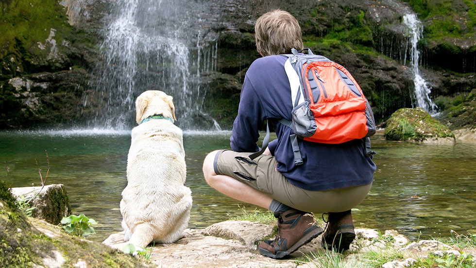 Places to go for Beach and Bush Walks with your dog