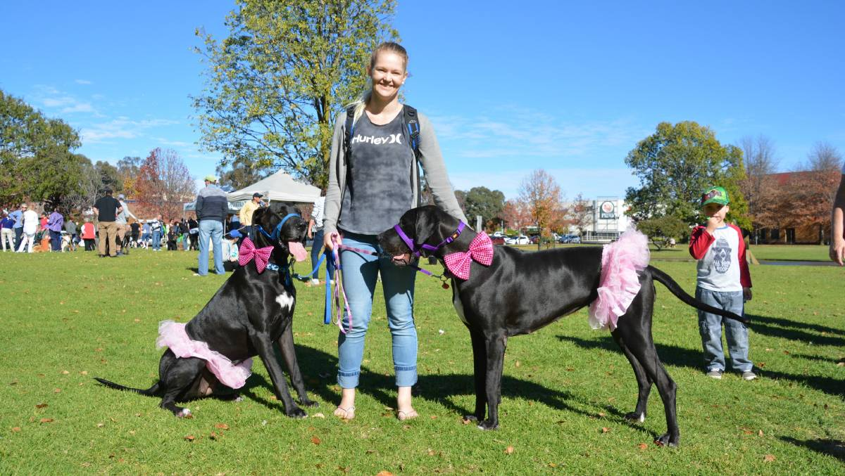 What is Million Paws Walk?