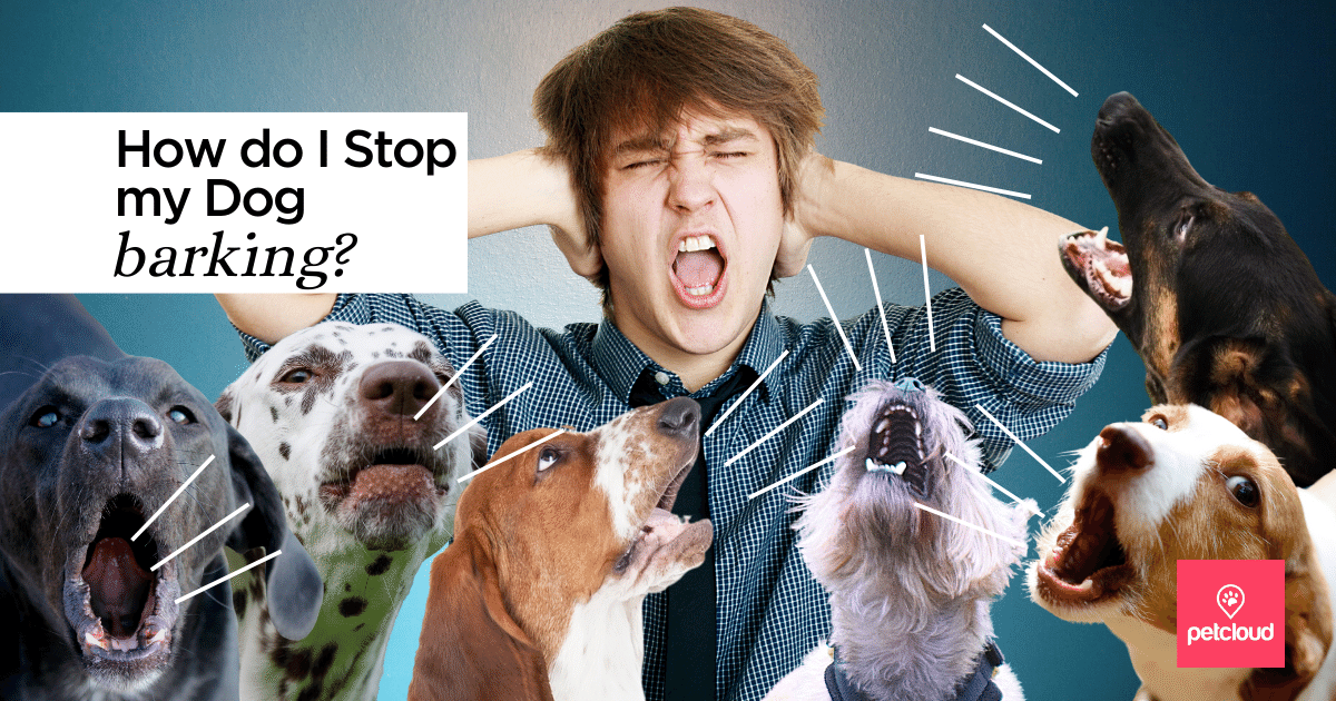 How to Stop my Dog Barking