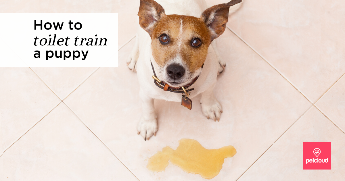 How to toilet train a puppy?