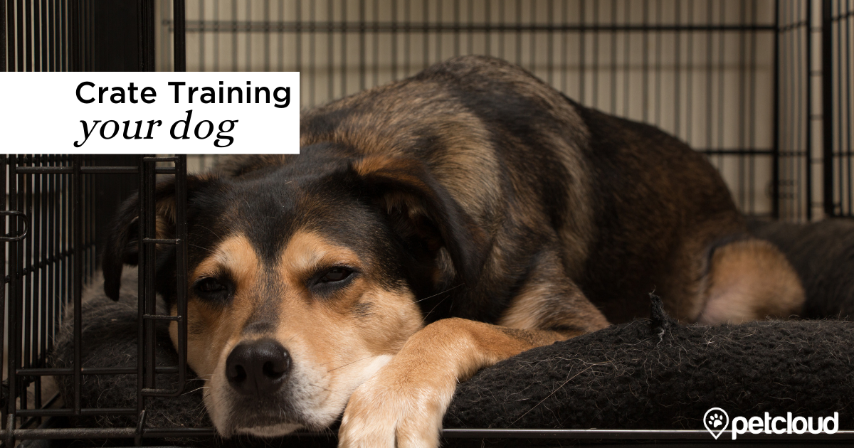 Five Tips for Crate Training Your Dog