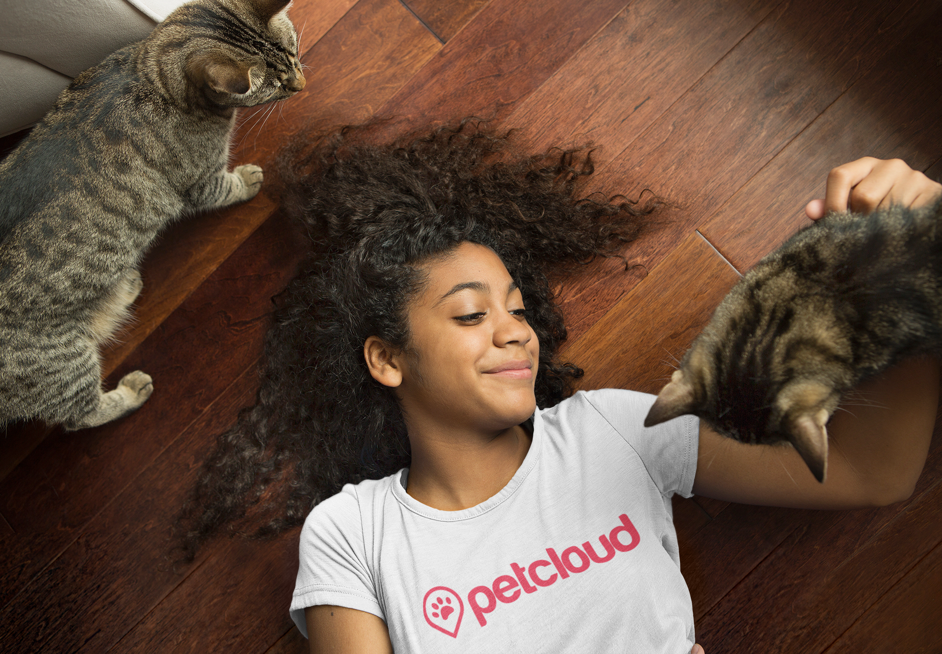 Why You Should Hire a Professional Cat Sitter