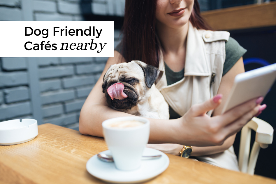 Looking for Dog Friendly Cafes Nearby?