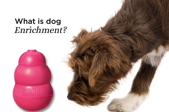Dog Enrichment Dog with kong