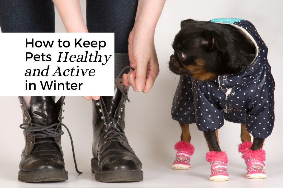 How to Keep Pets Healthy and Active in Winter.