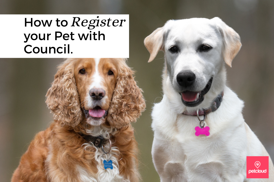 Registering your Pet with Council
