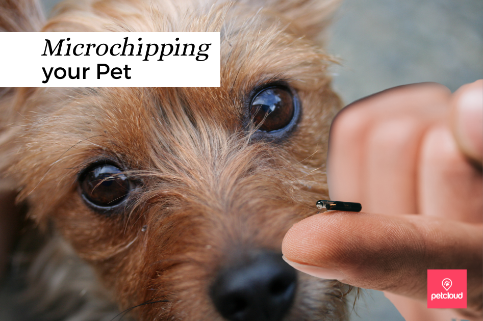 The Benefits of Microchipping your Pet