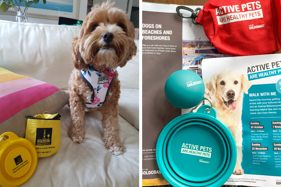 Brisbane City Council and Gold Coast Council stalls give out silicon water bowls, dog waste bag holders and helpful information