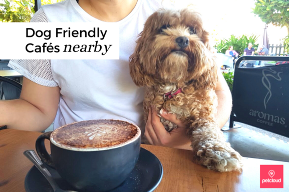 Dog Friendly Cafes nearby