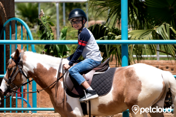 Equine Assisted Therapy, NDIS Horse Therapy, PetCloud