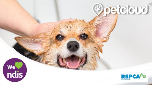 NDIS pet care, dog washing