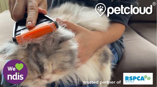 Cat grooming, ndis pet care