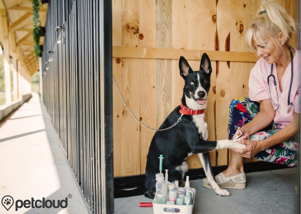 Pet Jobs with PetCloud you can get Animal Shelter Veterinarian Jobs with PetCloud