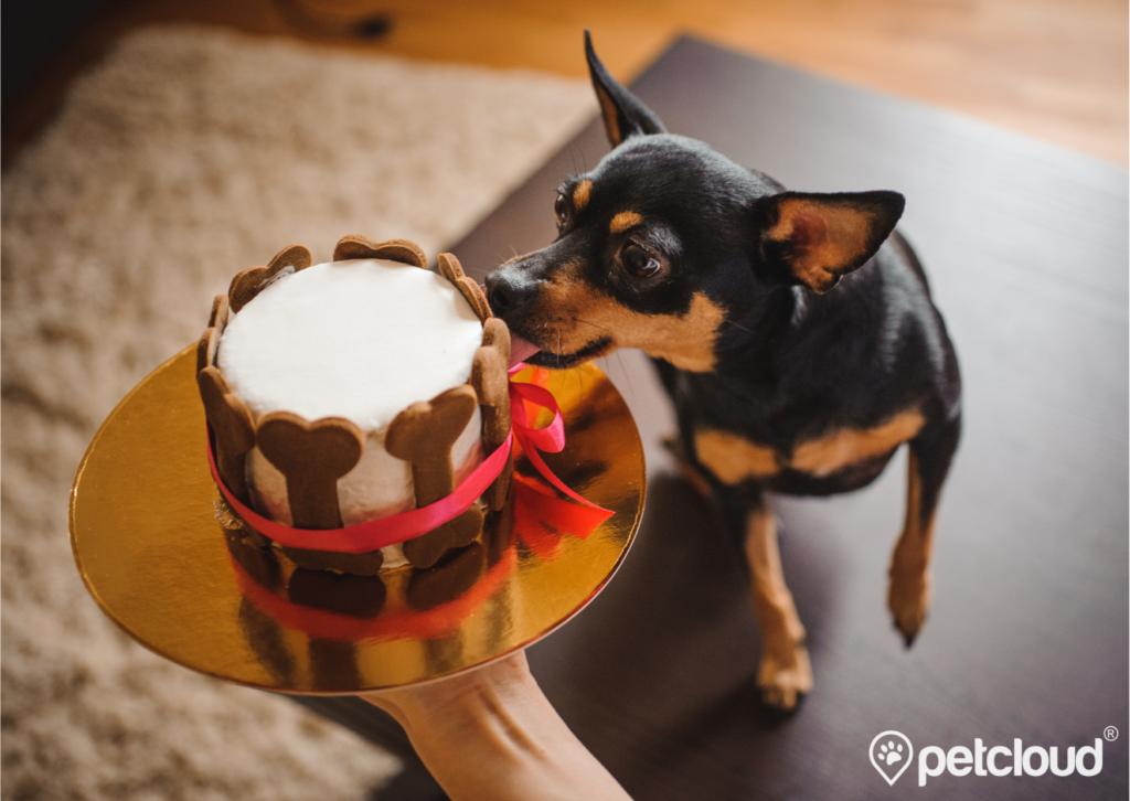 Pet Jobs with PetCloud you can get Dog Baker, Pet Baker, Pet Chef Jobs