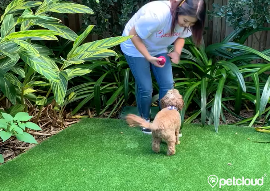 Pet Jobs with PetCloud you can work as a Doggy Day Carer and get jobs
