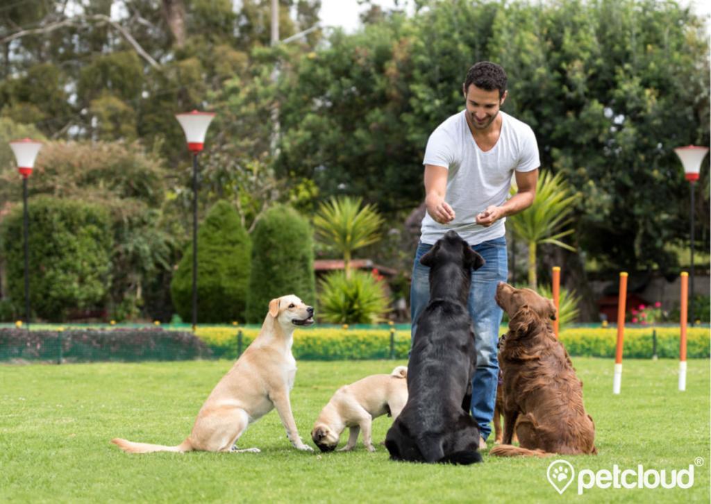 Pet Jobs with PetCloud you can get Dog Trainer Jobs