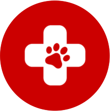These Pet Sitters have shown proof in obtaining formal First Aid from a recognised institution