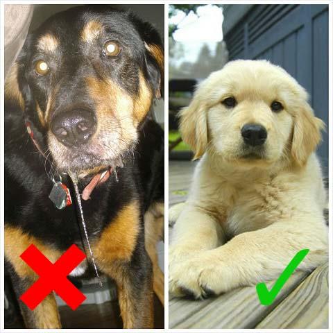 Pet Photo Tips