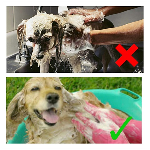 DogWashing