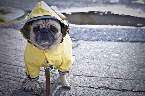 Pets in Disaster Pets in Cyclones Pets in Storms how to prepare your pet blog article image