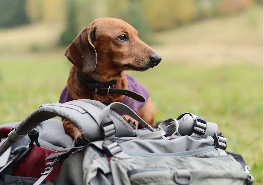 Must haves for a Pet sitter backpack