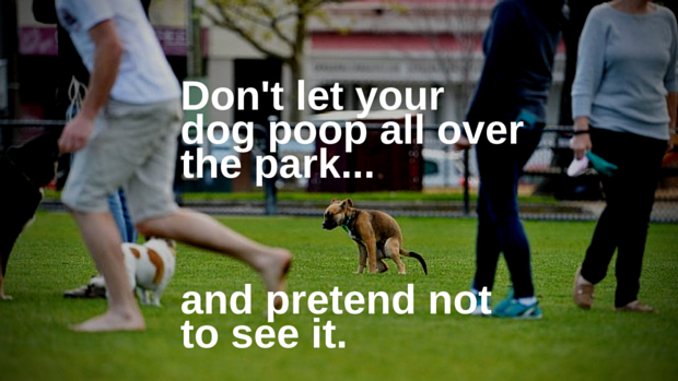 Dont ignore your dog and let it poop all over the park and pretend not to see it