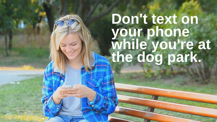 Don't text on your phone while you're at the dog park