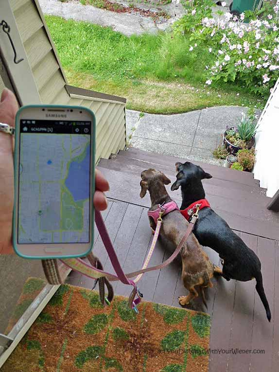 Geocaching with your dogs is a fun pet exercise option and there are plenty of free groups you can join online