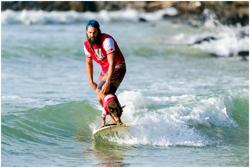 Dog Surfing at Noosa will ensure you get some pet exercise in for the day
