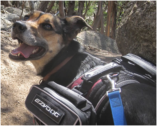 Australian company Dog Adventures do pet exercise and have amazing hikes you can do with your dog