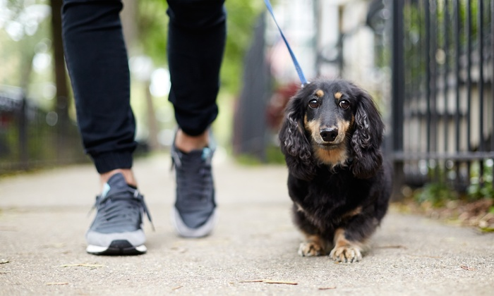 Dog Walking is the most relaxing pet exercise you can do
