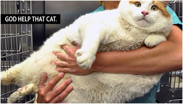 Fat Cat has no pet exercise