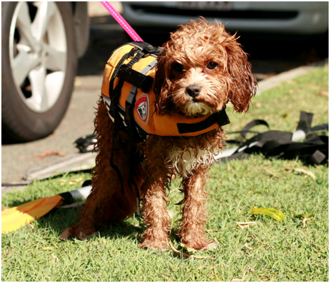 Milly in her XXS Ezy Dog Life Jacket – doing pet exercise through kayaking with her owner