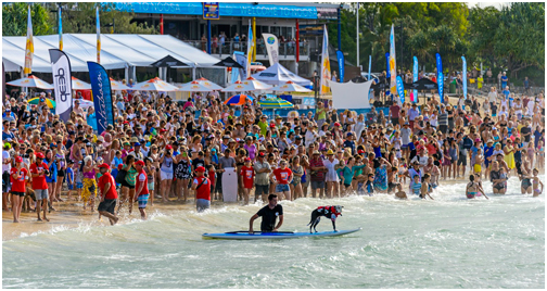 Dog Surfing at Noosa is a terrific form of pet exercise
