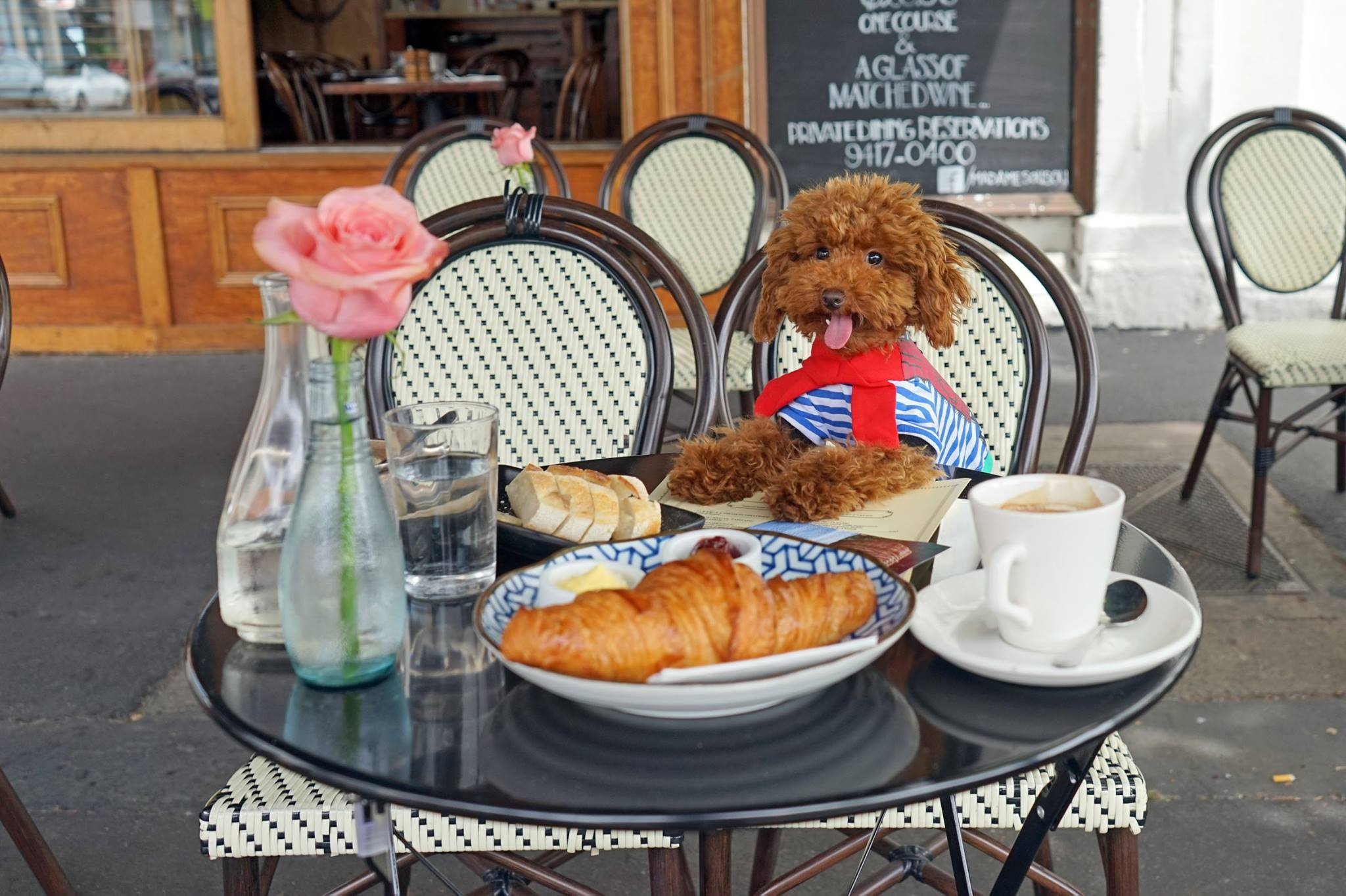 Dog Friendly Cafe's  blog article image