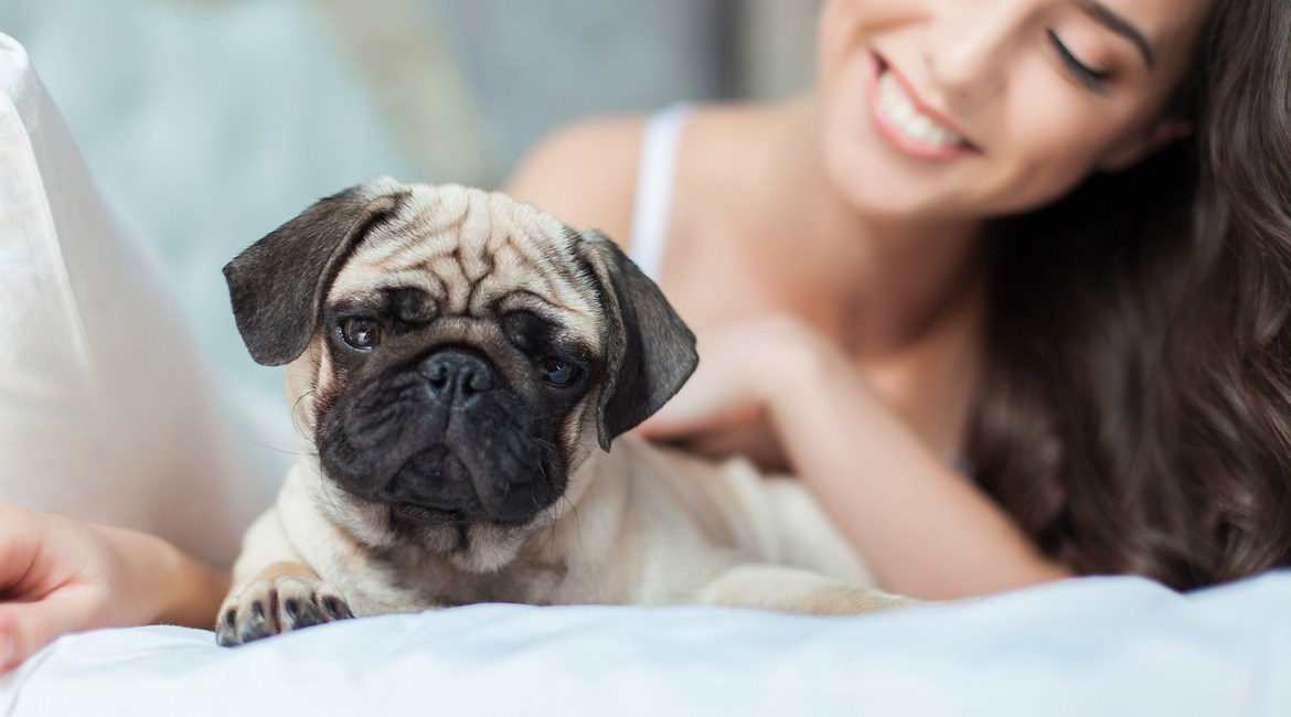 pet sitter experienced with pugs
