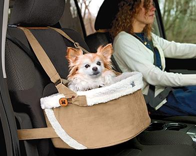 Licensed Pet Sitter