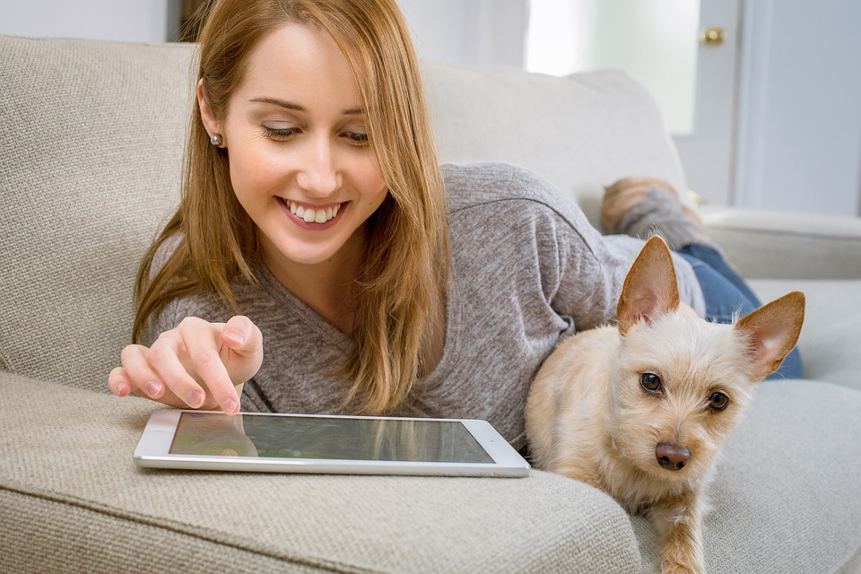 tax tips for pet sitters in australia blog petcloud