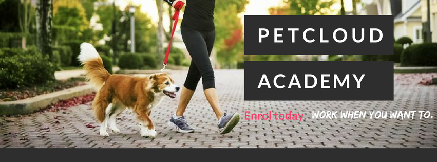 Accredited Pet Sitting Course