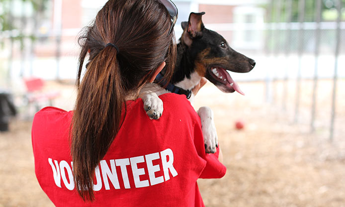Volunteer with a local non-profit or animal shelter