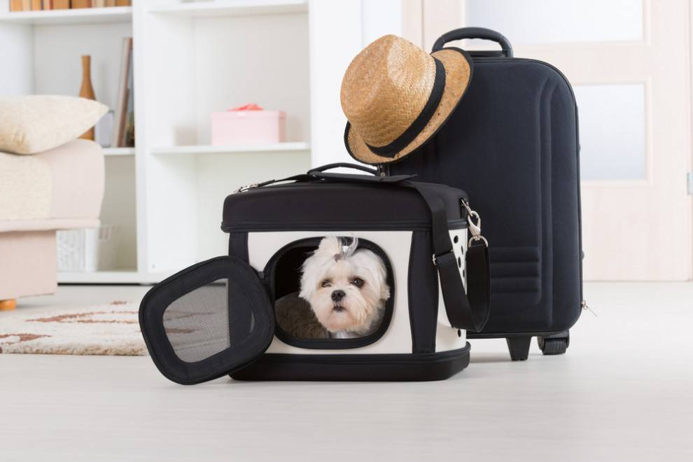 What to pack when your pet stays with a Pet Sitter