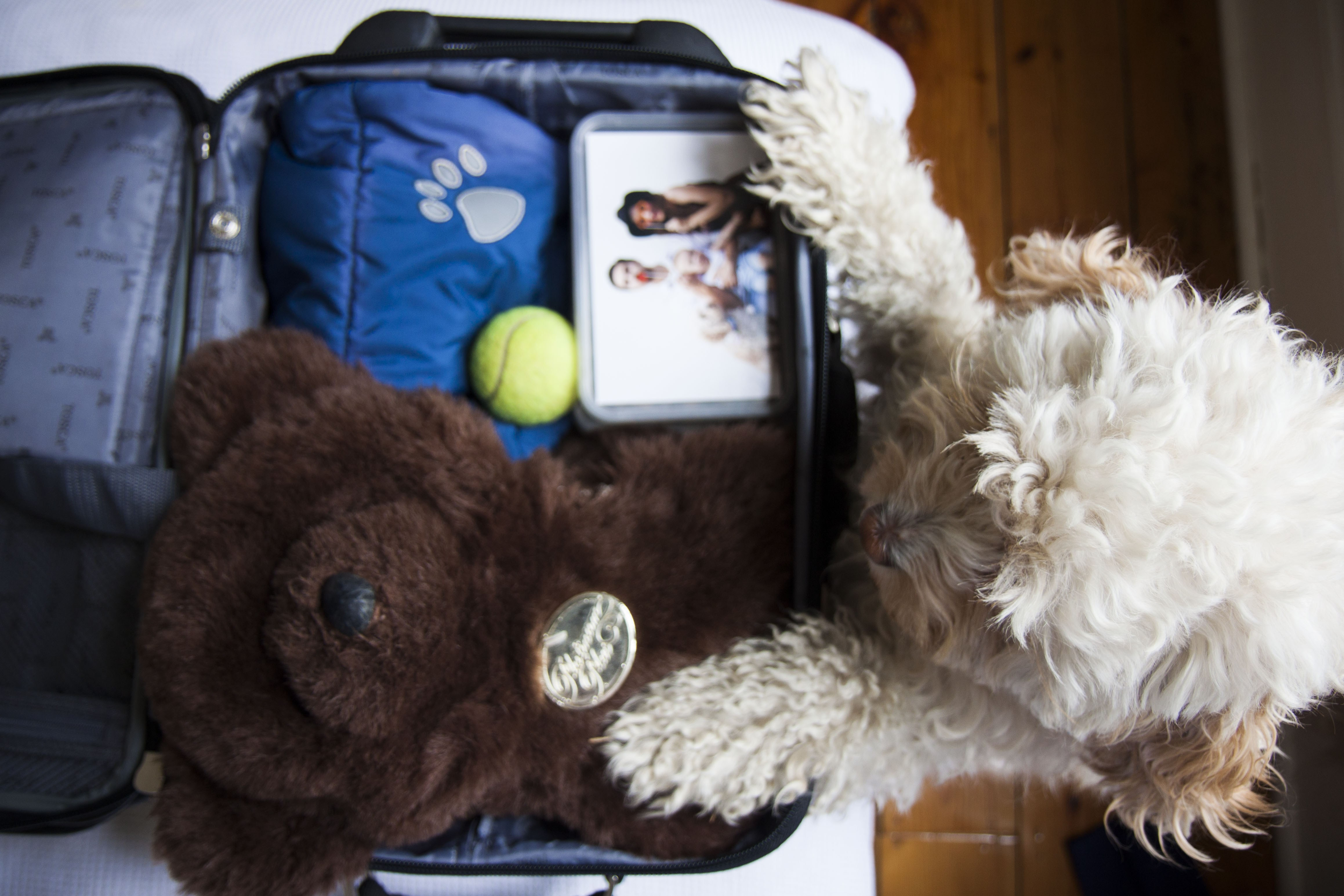 Shop and pack a Pet Holiday Bag