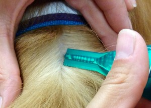 Apply flea and tick treatment to your dog or cat