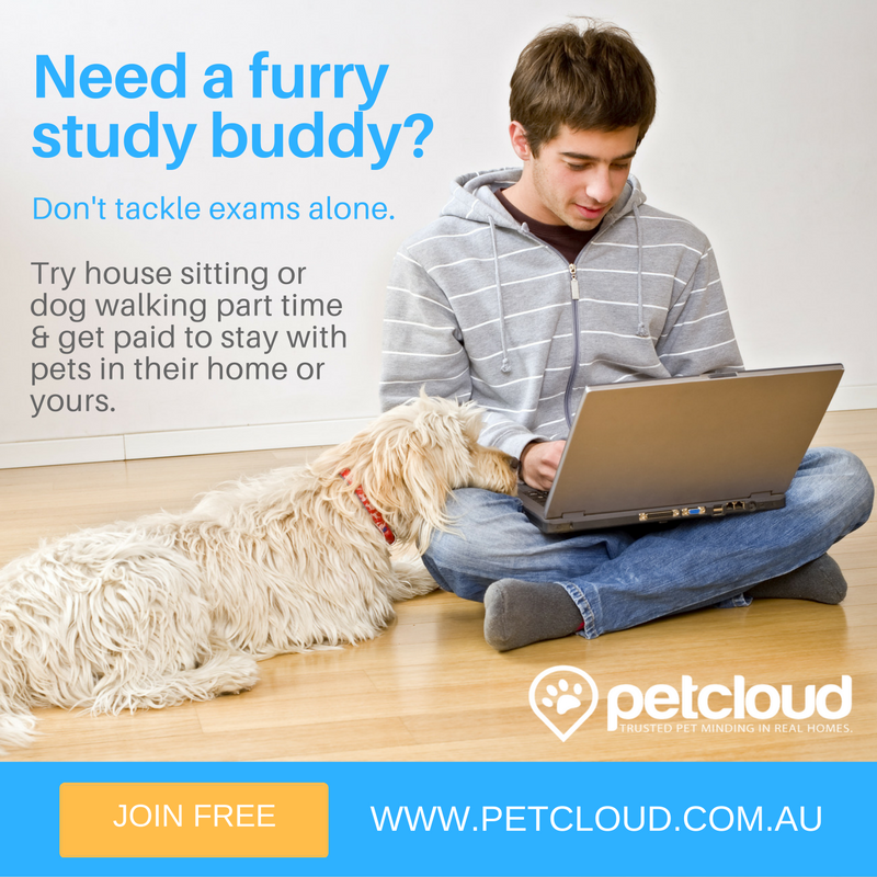 Need a furry study buddy?