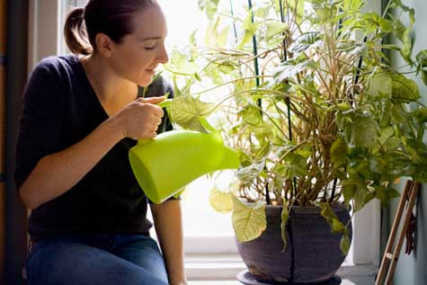 Leave instructions about your gadgets & if you need them to water the plants