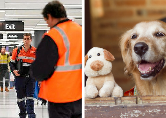 FIFO and Fly in Fly Out Jobs and Airport and Pet Sitting